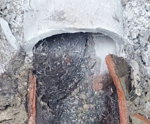 Sanitary sewer pipe with tree roots that grew inside